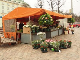 This market tent is dedicated to flowers